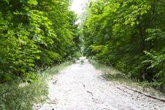 Poplar fluff on the road. Royalty Free Stock Image