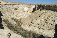 Poplar Grove in Ein Avdat Canyon in Israel royalty free stock photos