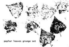 Poplar grunge leaves Royalty Free Stock Image