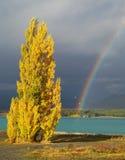 Poplar and lake Royalty Free Stock Photos
