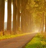 Poplar lane. Indian summer sunrise through tall trees royalty free stock photos