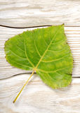 Poplar leaf on a wooden background Stock Photo