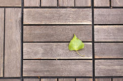 Poplar leaf on a wooden background Stock Images