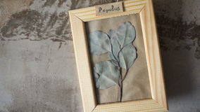Poplar leaves in picture frame on wall. Interior stock video