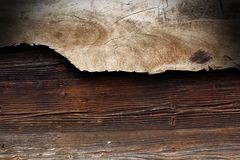 Poplar piece of wood Stock Photography