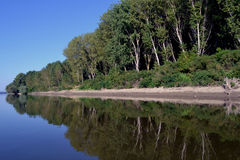 Poplar plantations on the Danube. Natural Willow forest is replaced with poplar scheduled hybrid. Here hybrid poplar forest on the banks of the Danube stock image
