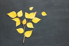 Poplar populus, cottonwood tree made from branch and yellow falling leaves on chalkkboard background. Autumn concept. Flat lay. Copy space stock photos