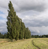 Poplar and rain clouds Royalty Free Stock Photo