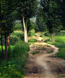 Poplar tree lined path Stock Photo
