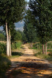 Poplar tree lined path Royalty Free Stock Photography