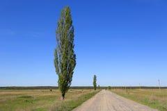 Poplar tree near road Royalty Free Stock Photography
