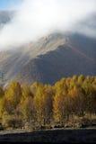 Poplar trees Royalty Free Stock Photo