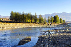 Poplar Trees along the River Bank. The water comes from mountain snowmelt, and flows along the gravel bed Stock Photography