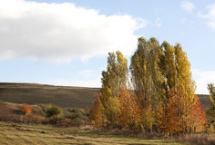 Poplar trees in autumn - RAW format Royalty Free Stock Photography