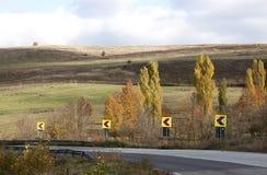 Poplar trees - RAW format Stock Photos