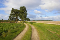 Poplar trees and farm track Royalty Free Stock Photo