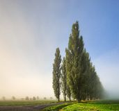 Poplar Trees in fog. Poplar alley in the cold October morning Royalty Free Stock Photography