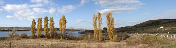 Poplar trees panorama Royalty Free Stock Image