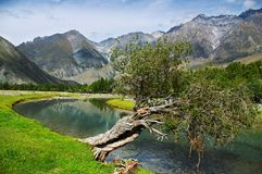 Free Poplar, Turquoise River And Mountains Royalty Free Stock Images - 510719