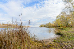 Poplar and Willow Trees Close to the River, in Autumn Royalty Free Stock Image