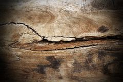 Poplar wood cracked texture Stock Images