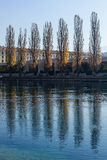 Poplars along the river. Poplars along a river by a sunny autumn day Stock Image