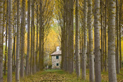 Poplars and chapel Stock Photos