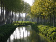 Poplars and dark river. Some poplars. Catalonia. Spain Royalty Free Stock Photography