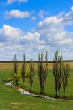 Poplars and a lake. Country landscape in Romania with poplars and a lake Royalty Free Stock Image