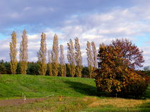 Poplars in landscape Royalty Free Stock Photos