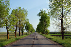 Straight Road Poplars Royalty Free Stock Images