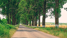 Poplars on road Royalty Free Stock Photos