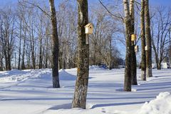 Poplars. spring birdhouses on trees in the Park. Concern about urban birds Stock Photography