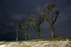 Poplars in winter night Royalty Free Stock Images