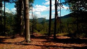 Popołudnie krajobraz fotografia royalty free