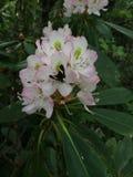 popołudniowe kwiaty motylich późno pastwiska naturalne Zdjęcie Royalty Free