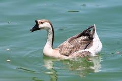 Popołudniowy pływanie Zdjęcie Stock