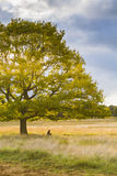 Popołudniowy słońce dostaje przez zielonego drzewa Zdjęcie Stock