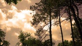 Popołudniowy Timelapse chmury stacza się wysokimi conifer drzewami w natura parku przy półmrokiem ALT zbiory