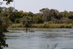 Popo cade al fiume di okawango in Namibia in afrika fotografia stock libera da diritti