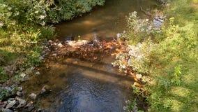 Popołudniowa rzeka Fotografia Stock