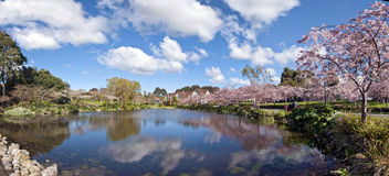 popołudniowa wiosna zdjęcia royalty free