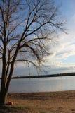 Popołudniowy jezioro park z drzewem Obraz Royalty Free