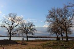 Popołudniowy jezioro park z niektóre drzewami Obraz Royalty Free