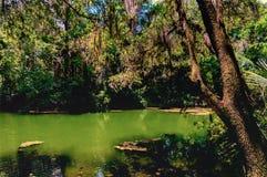 Popołudniowy samotny rzeka Obraz Royalty Free