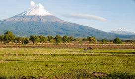 Popocatepetl and Iztacciuatl Royalty Free Stock Images