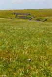 Popolare delle pecore Fotografia Stock Libera da Diritti