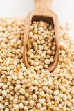 Poppa för Quinoa royaltyfria foton