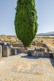 Poppelträdet och den detaljerade mosaiken på romaren fördärvar av Volubilis nära Meknes, Marocko, Afrika Royaltyfri Bild