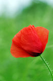 Poppie Stock Images